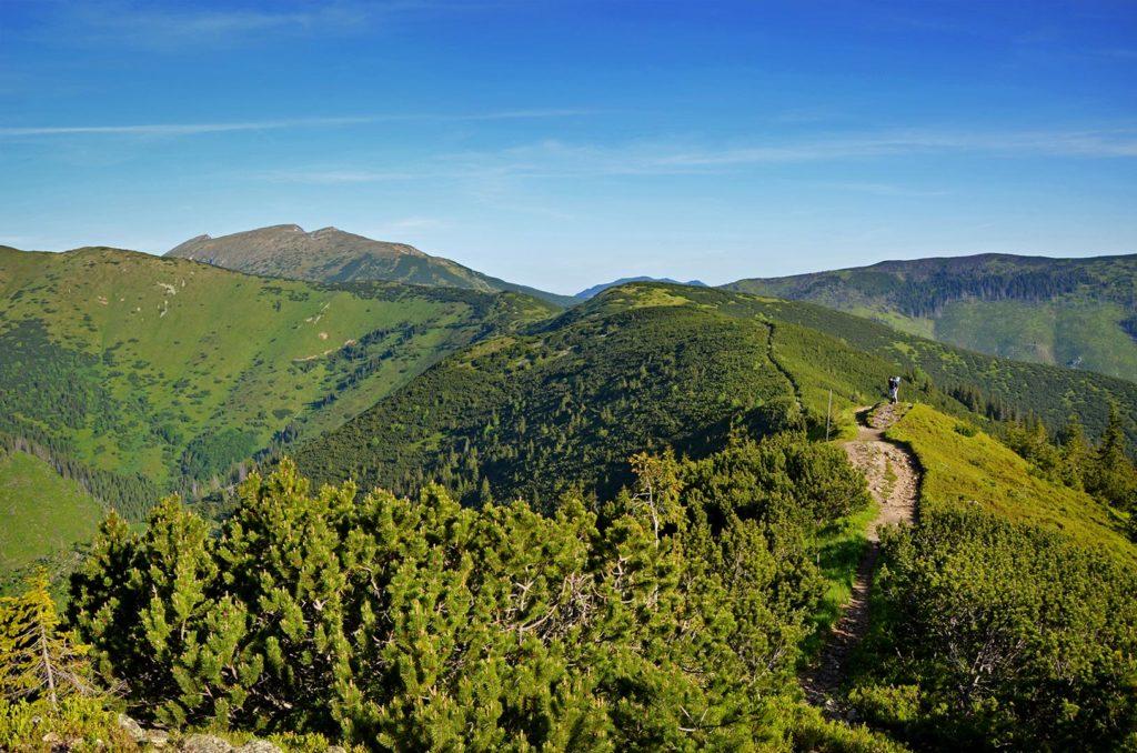 Kosodrevinou pokračujeme ďalej po hrebeni.